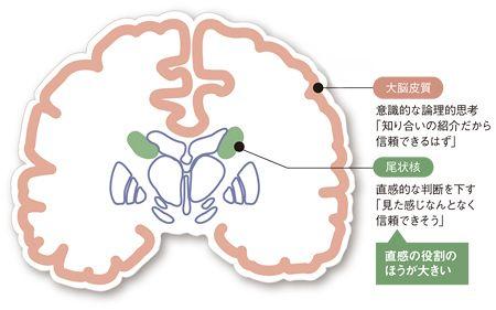 直感 脳科学 に対する画像結果