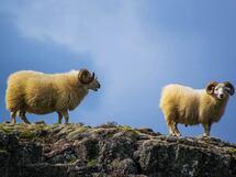アラフォーの私たちは吉田羊の夢を見るか?