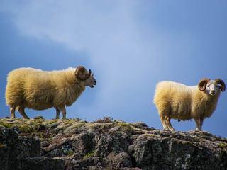 アラフォーの私たちは吉田羊になりたいか
