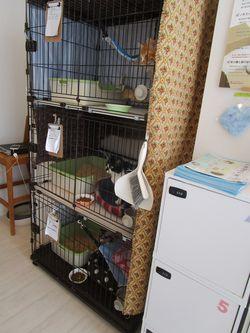 「ケット・シー」でのケージの様子。殺処分を免れた猫が保護されている。(撮影=笹井恵里子)