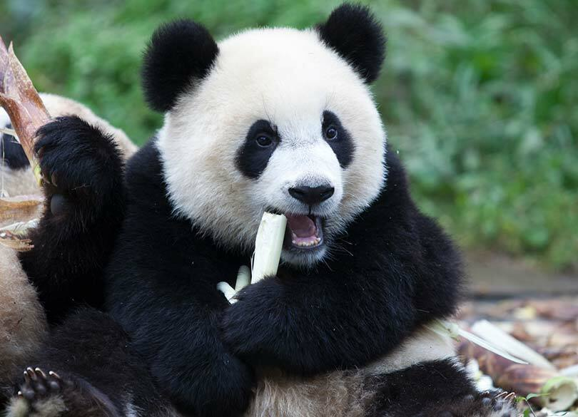 なぜ成都の女性は中国で一番キレイなのか パンダより注目すべき街の美女たち