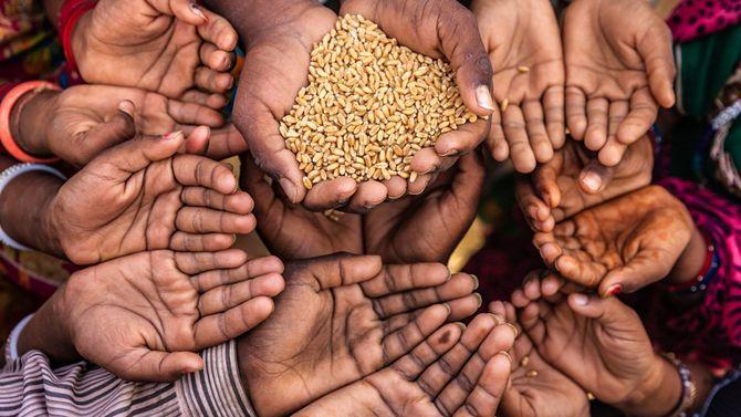 食べ物を欲しがるインドの子供たちの手