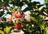 なぜ、沖縄では赤色の商品が売れるのか?