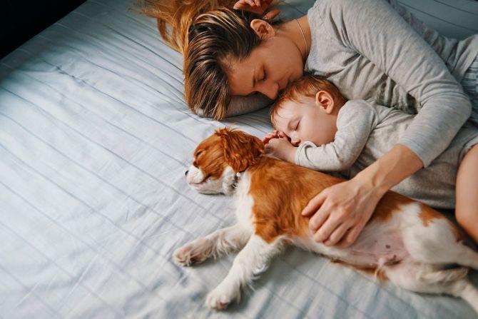 母親と赤ちゃんと子犬が一緒にお昼寝