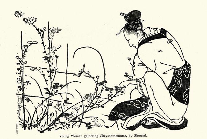 菊を摘む若い女性